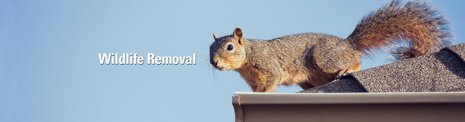 Summit Environmental Solutions Squirrels Control