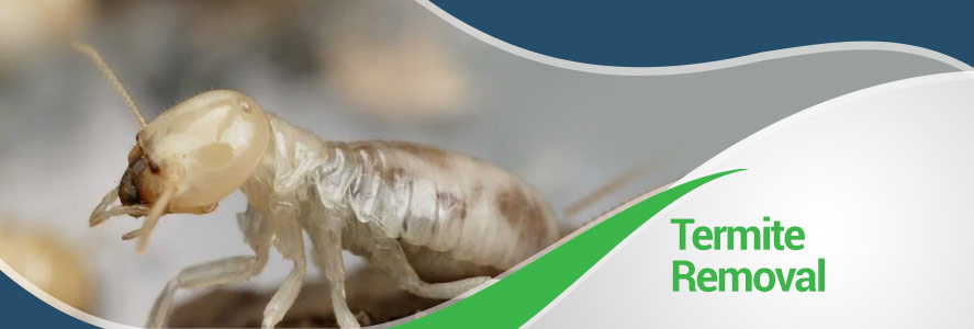 Termites Removal in Fairfax, Alexandria and Arlington, VA