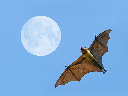 bat flying through air with moon