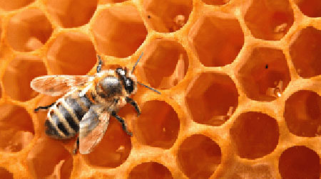 Bees Are Quickly Awakening & Swarming