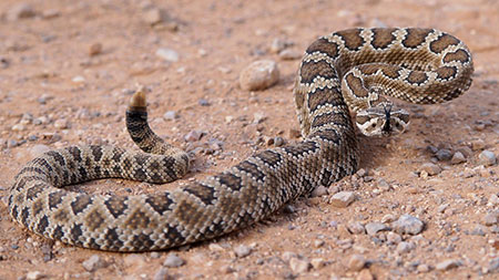 What You Need To Know About Snakes In Virginia