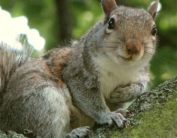 Squirrel Removal: 10 Things You Need to Know