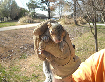 12 Mind-Blowing Facts About Squirrels