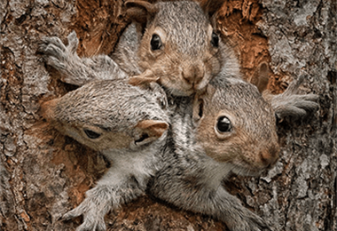 20 Fun Facts About Squirrels