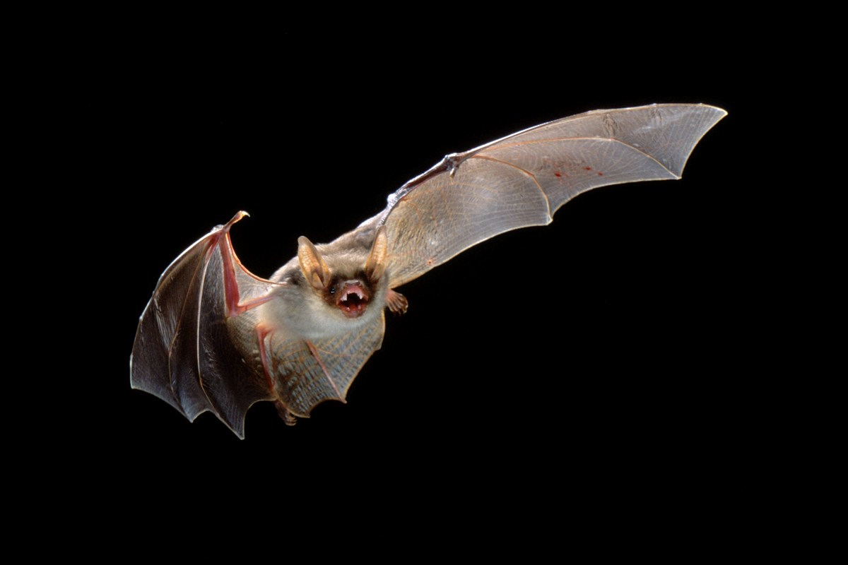 20 Things You Didn't Know About Bats!