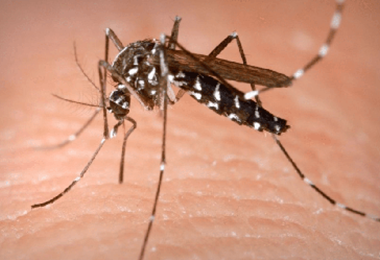 Mosquitoes: Most Frequently Asked Questions & Answers | Say YES to SES