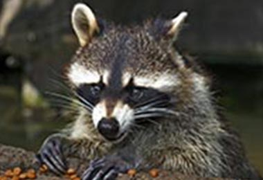 Professional Critter Control Can Help