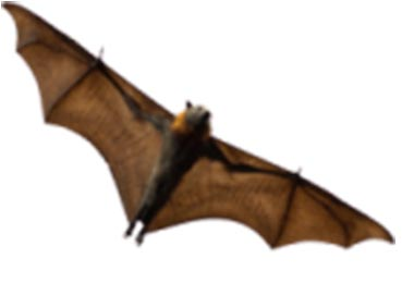 Bat Removal in Virginia & Bat Facts