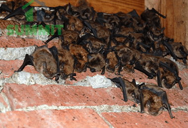 21 Random Facts About Bats