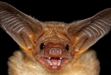 Bats: The Skinny On Virginia Law