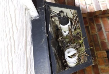 7 Tips for Keeping Birds Off Your Porch Lights