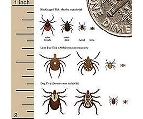 Your Field Guide To Ticks In Virginia | Say YES to SES