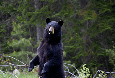 HAVE YOU SPOTTED A BEAR ON YOUR PROPERTY?