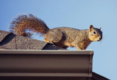 Reasons to Revel in Having Squirrels Nearby