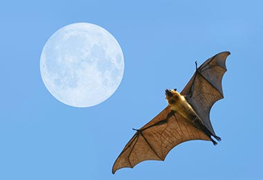Northern Virginia Bat Removal Experts Are Here