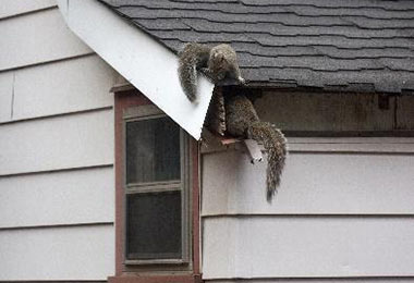 Squirrels in Urban Areas