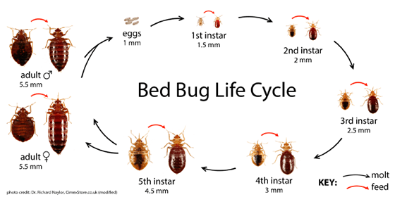 DON''T PASS YOUR BED BUGS ON TO OTHERS.