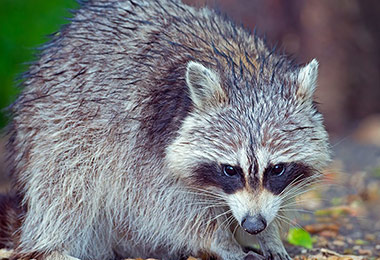 Why is Critter Control Important? Your Virginia Wildlife Removal Experts