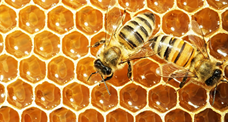Working Bees On Honey