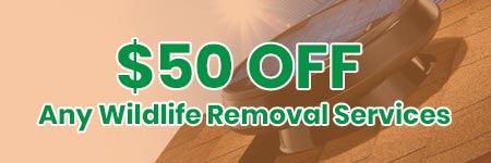 wildlife removal offer